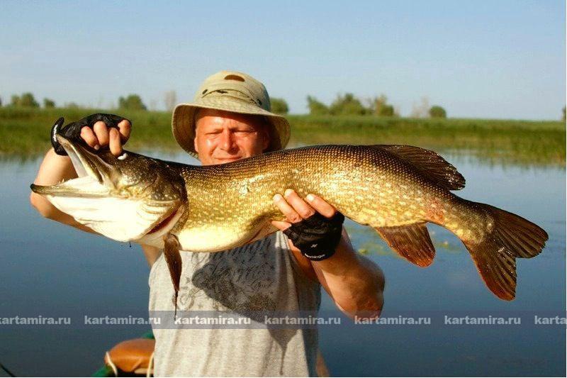Рыбак по-польски